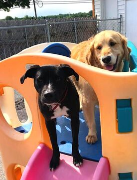 Stay and Play Doggie Daycare Puppies